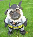 batdog_small.jpg